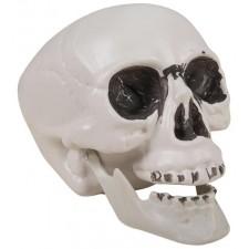 Faux crâne en plastique pour décoration d'Halloween